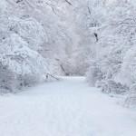 sneg_3